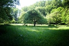 Velaines (Celles) (syldeles) Tags: velaines celles belgique nature arbre prairie sauvage paisible herbes