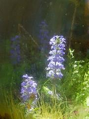 Au jardin. (caramoul25) Tags: jardin jarre autarcie bleu caramoul25