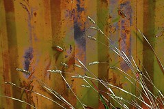 Grass in front of Abstract! (maginoz1) Tags: abstract art fence grass thistle manipulate winter june 2017 bulla melbourne victoria australia canon g3x