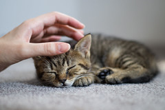Sleepy (PaukSK) Tags: lil sleepy cat kitty canon eos m5