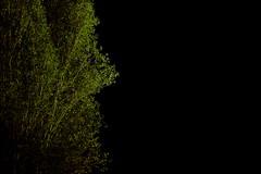 I BECAME A TREE (halukderinöz) Tags: plant bitki ağaç tree kavak poplar melih cevdet anday talat sait halman ankara türkiye turkey hd canoneos40d canon 40d