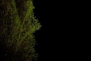 I BECAME A TREE