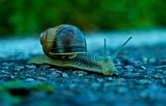 Snail on the road by Andrew Goldman (Andrew Goldman) Tags: snail shell creature nature travel best amazing great awesome love life journey street park trees grass earth world beautiful micro close look see follow lke like fave andrewgoldman