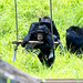 Chimpanzee's Parent and Child : チンパンジーの親子