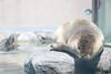 水族館52 (ののリサを信じろ) Tags: 水族館 白熊 カエル 蛙 シロクマ なまはげ 獅子舞 神社 桜 鯉のぼり アシカ