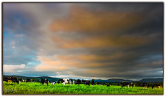 Could this be the Milky Way? (tippjim) Tags: tippjim nikon2470 landscape cows clouds glasha