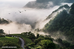 Morning foggy tea plantation @ PingLin (grant1980:)) Tags: morning foggy tea plantation 南山寺 坪林 pinglin taiwan