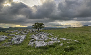Limestone path.