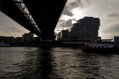 _DSC7655 (durr-architect) Tags: spiegelwaal ruimte room river waal nijmegen netherlands high water flood island bridge nevengeul
