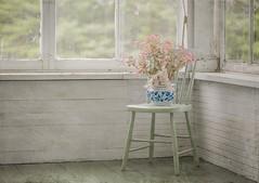 Favorite flower pot (jm atkinson) Tags: windowwednesday farmhouse flowers maine newengland pink blue aqua porch