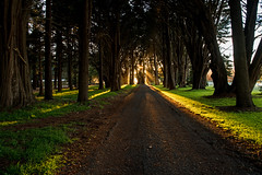 Light between the trees (Jeff_Warner) Tags: nikond810 nikon247028 landscape