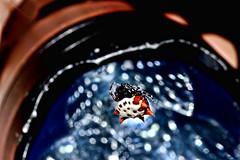 spiny orb weaver (donjuanmon) Tags: donjuanmon nikon nature night arachnid spider hss slidersunday sliders spinyorbweaver led nightsafari
