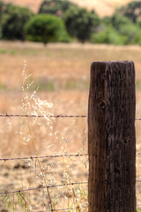 POST (Jsned66) Tags: canon california solano canon6d barbed barbedwire wood post fence country field farm woodpost vacaville 135mm