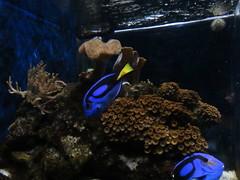 IMG_0242 (Alejandro Perez M.) Tags: medellin parqueexplora acuario