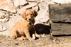 (emeksv) Tags: darkhorse willow bestof homes pets type coloradosprings colorado unitedstates