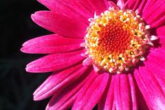 Flor / Flower Close Up (LeonCalquin (2)) Tags: leon calquin fotos photos vincent carolina marcelo videos santiago chile flickr quincal huine huiñe aquelarre lago vichuquen diseño catalog catalogo senderismo hiking travel viajes flor flower close up