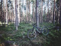 Evening Biking 3 (pjen) Tags: nordic freedom boreal maastopyörä pike 275 650b kashima trail bicycle bike 2x11 outdoor vehicle 5010 5010cc 50to01 summer suspension forest santacruz mtb finland nature carbon fullsuspension hiilikuitu