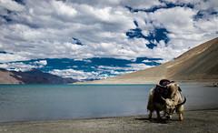 Pangong Lake (Navaneeth K N) Tags: landscapes type bluesky jammuandkashmir ladakh leh pangonglake