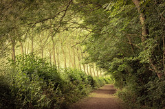 Through the woods (Matthew Johnson1) Tags: woods path light sunset northamptonshire walking nature colour green outdoor nopeople