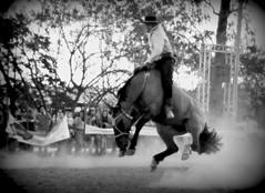 Douglas Muralha (Eduardo Amorim) Tags: gaúcho gaúchos gaucho gauchos cavalos caballos horses chevaux cavalli pferde caballo horse cheval cavallo pferd crioulo criollo crioulos criollos cavalocrioulo cavaloscrioulos caballocriollo caballoscriollos pampa campanha fronteira uruguaiana riograndedosul brésil brasil sudamérica südamerika suramérica américadosul southamerica amériquedusud americameridionale américadelsur americadelsud cavalo 馬 حصان 马 лошадь ঘোড়া 말 סוס ม้า häst hest hevonen άλογο brazil eduardoamorim jineteada gineteada