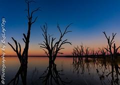 IMG_5452 (biglaptogs) Tags: barmera lakebonney riverland sa states sunsetsunrise