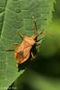 Nice peeing bug (CapMarcel) Tags: nice peeing bug pee poo bed