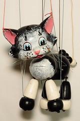 cat 1968 - 1984 (Margaret Stranks) Tags: pelhampuppet handmade marlborough wiltshire uk marionette stringpuppet cat whiskers