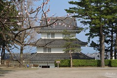 170330a6486 (allalright999) Tags: canon eos m3 japan nagasaki shimabara castle 日本 長崎 島原 島原城 梅花 plum blossom