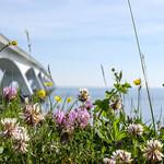 Flowers and the bridge thumbnail