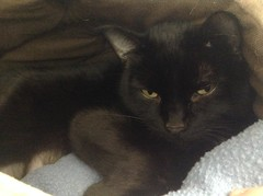 Princess - 6 year old spayed female
