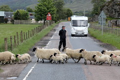 Scottish Traffic Jam #2 (just.Luc) Tags: royaumeuni verenigdkoninkrijk unitedkingdom grootbrittanië grandebretagne greatbritain scotland schotland ecosse man male homme hombre uomo van sheep schapen moutons herd kudde troupeau road weg route highlands herder berger shepherd