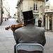 1 O Violinista