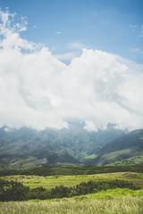 Mountain Hiding (Kou Thao) Tags: animals nature wildlife hawaii scenery photograhy kokohead adventure vintage vibes tropical airplane sky sunset clouds traveler luau horse jungle