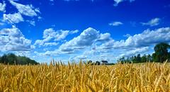 Weizenfeld im Sommer (florian.glechner) Tags: weizen weizenfeld wolken landschaft himmel haus bäume landschaftsaufnahme ndfilter graduierterndfilter graduated nd graduatedneutraldensity polfilter lee leefilters