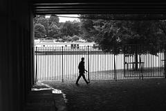 Along fences (pascalcolin1) Tags: paris13 homme man seine grilles fences ombre shadow lumière light photoderue streetview urbanarte noiretblanc blackandwhite photopascalcolin