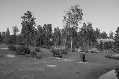 Idyll (Mika Hiironniemi) Tags: landscape blakandwhite monochrome horses furuvik sweden