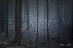 Whispers Of The Forest (Alec Lux) Tags: hdr hdrphotography belgium brakel brakelbos branches fog forest landscape landscapephotography mist nature naturephotography spring sunlight trees woods vlaanderen be
