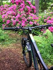 Rhododendron Park 2 (pjen) Tags: santacruz mtb finland nature forest carbon lake fullsuspension nordic freedom boreal maastopyörä pike 275 650b kashima trail bicycle bike 2x11 outdoor vehicle 5010 5010cc 50to01 flowers rhododendron park summer