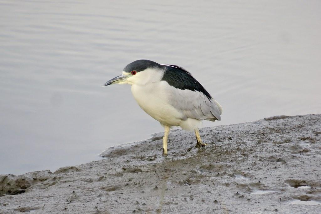 Birds of Bothin Marsh