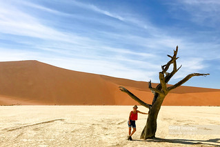 Petrified Forest, Deadvlei, Namibia, Africa