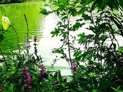 Emerald Blessing~ (K.Chris ~AlwaYs LeaRning~) Tags: pond river lake nature outdoors butterfly green emerald capture wildlife wilderness reflection sun light shadow shade plant flowers pink