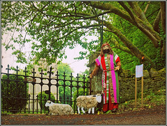 Joesph's turn to scare the crows................. (Jason 87030) Tags: sheep lamb shephard jospeh bible lore coat technicolour color colour beard man story gatcombe stolave chillerton scarecrow gates wet weather damp dull dark iow island holiday may 2017 isleofwight trees church sony ilce nex a6000 lens flickr tag photoshop lighting brightness frame border event show exhibition competiition