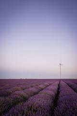 Leading lavender (CreArtPhoto.ro) Tags: mov composition flowers flori purple albastru lavanda simple blue leadinglines bulgaria cer apus fields sky windmill lavender sunset tyulenovo