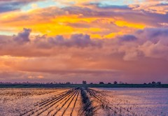(Marc Crumpler (Ilikethenight)) Tags: landscape usa california delta flooded field water clouds sunset trees marccrumpler canon canon6d 6d 70300mmf456l