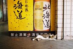 Drunken? (YL.H) Tags: cat straycats street canon film analogy taiwan taipei 台北 萬華 底片 kodak 500n