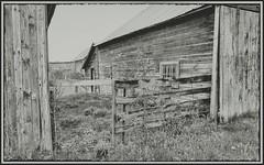 Forgotten. #HFF (Note-ables by Lynn) Tags: hff fencefriday balaclavaontario abandoned fallingapart oldfarm ghosttown monochrome blackandwhite fences