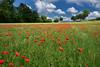 Le pré aux coquelicots (Excalibur67) Tags: nikon d750 sigma globalvision 24105f4dgoshsma paysage landscape nature flowers fleurs coquelicots poppies pavots nuages ciel cloud sky arbres trees