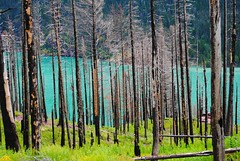 blue & green (ekelly80) Tags: montana glaciernationalpark nationalparkservice nps june2017 keisgoesusa roadtrip optoutside findyourpark mountains rockymountains goingtothesunroad sunriftgorge view scenery charred fire burnt burned trees water blue glacier beautiful walk hike lake stmarylake green grass