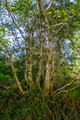 Photo of Dunmere Wood