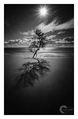 DAYLIGHT (Vaughan Laws Photography | www.lawsphotography.com) Tags: longexposure landscape lawsphotography longshutterexposure longexposurebwfineart blackandwhite bw beach blackandwhitefineart fineart tree seascape shoreline shadows shadow neutraldensityfilter ndfilter canon australia vaughanlaws vaughanlawsphotography sand sky sunrays sunburst